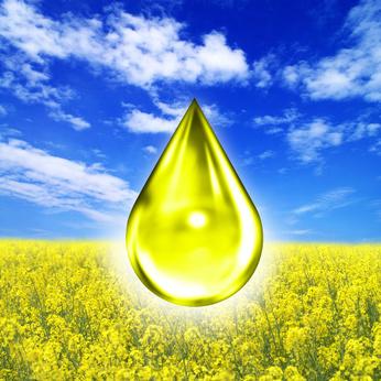 Raps 246 L Alternativer Kraftstoff Bio Diesel